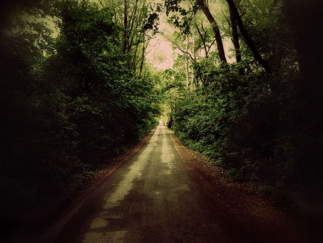 The Way Forward Tree Road Transportation Growth Tranquility Long Tranquil Scene Diminishing Perspective Empty Road Vanishing Point Nature Non-urban Scene Scenics Outdoors Branch Day Green Color Solitude Beauty In Nature