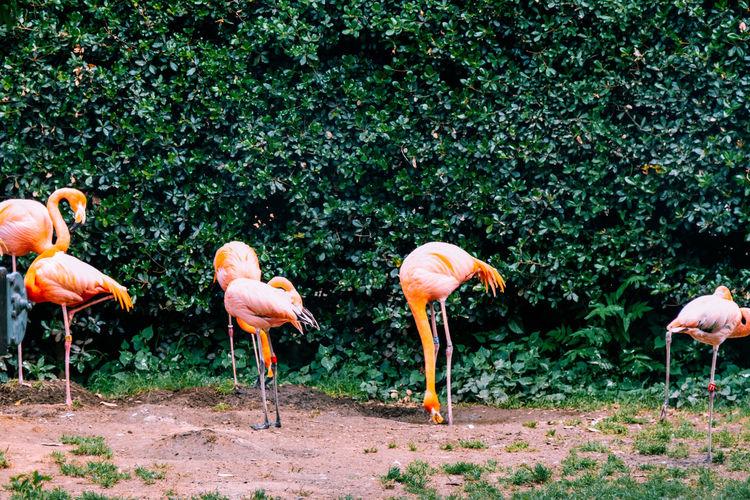 Bird Team