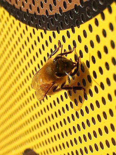 Just minding my beesness.