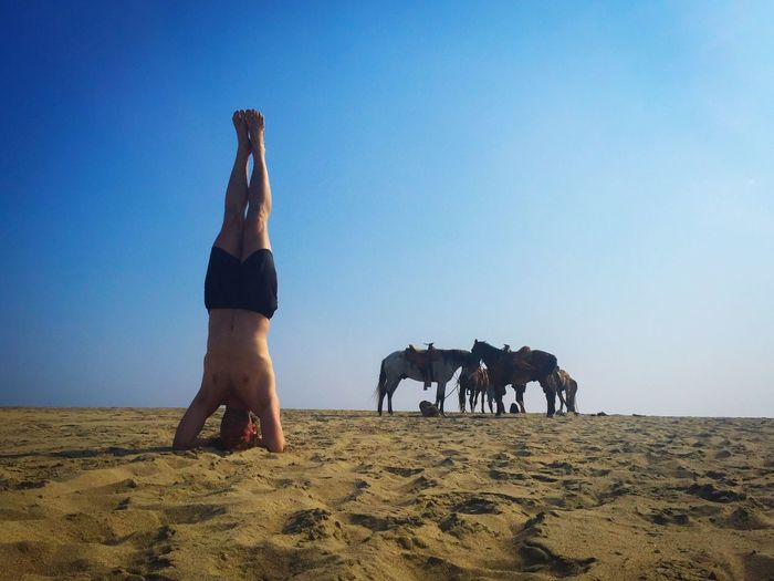 Headstand and horses Outdoors Clear Sky Horse Beauty In Nature Beach Yoga Mexico