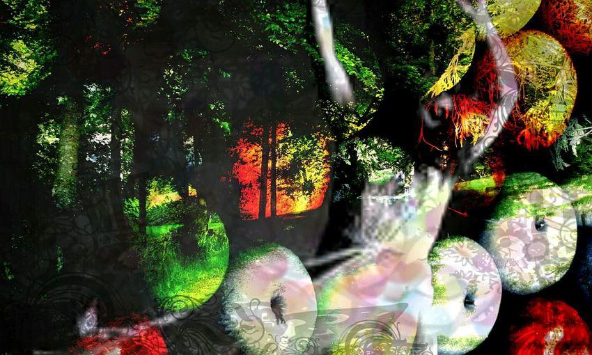 La Reine Des Pommes EyeEm Nature Lover In The Forest ritual danse