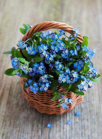 Forget me not Forget Me Not Flowering Plant Flower Plant Freshness Vulnerability  Fragility Nature Basket Beauty In Nature Decoration Wicker Table Flower Arrangement Flower Head