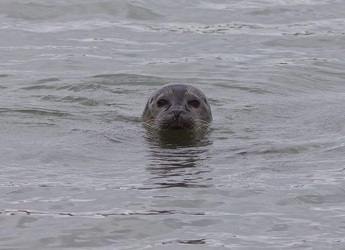Portrait of turtle in sea