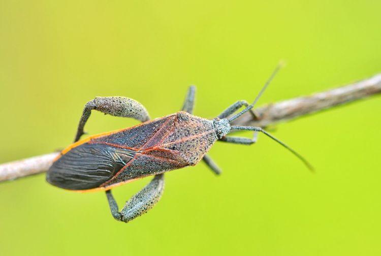 Close-up of shield bug on leaf