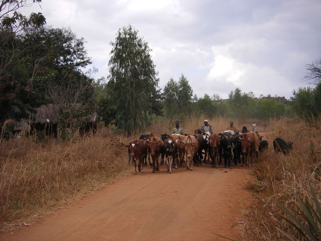Nature Working Animals African