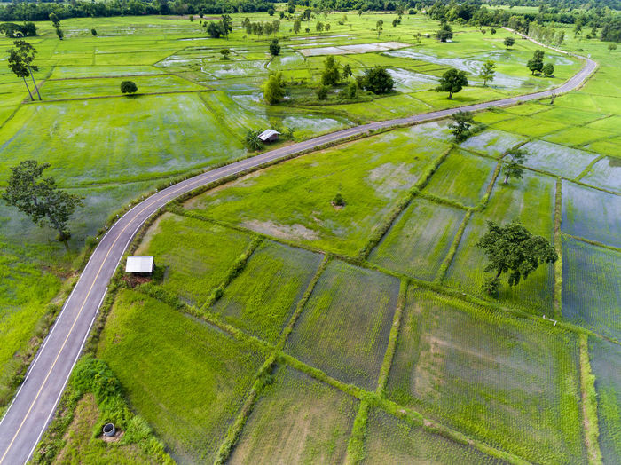Aerial View of Green Rice Field in Nakhonphanom Thailand at Sunset. Plant Aerial View Grass Green Color High Angle View Landscape Nature Day Agriculture Outdoors Scenics - Nature Environment No People Sport Tree Field Rural Scene Transportation Tranquil Scene Distant
