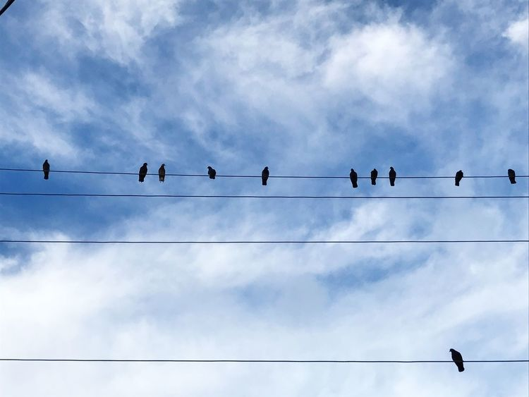 Birds on a wire! Friendship Friend Bird Animals In The Wild Animal Themes Low Angle View Large Group Of Animals Animal Wildlife Cable Perching Flock Of Birds Cloud - Sky Wildlife Sky Connection Power Line  Outdoors Day Silhouette Power Supply No People Electricity