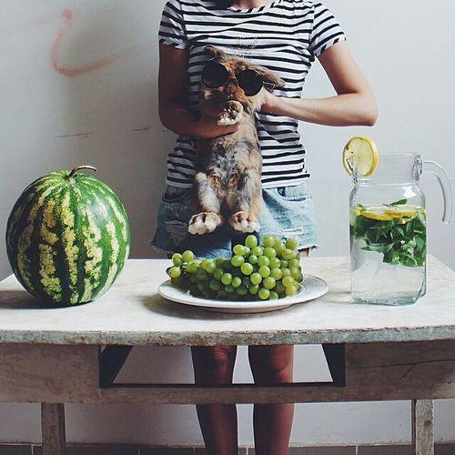 Rabbit Crazy Grapes Watermelon Funny Poland Friend ⬆ ig : dzulliet.t