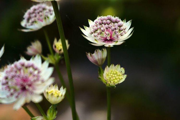 Kwiaty Flowers Nature Natura