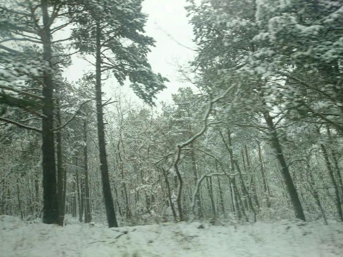 Un Paisaje de un Bosque Nevado