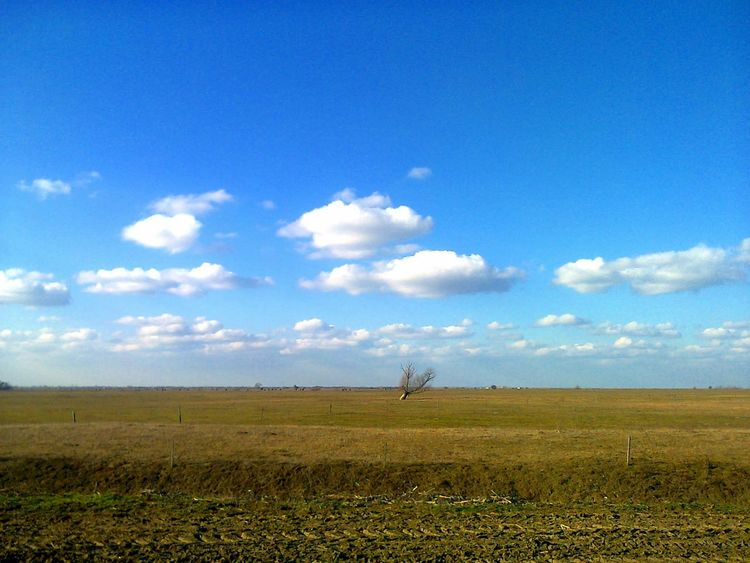 mere in winter Beauty In Nature Blue Cloud - Sky Day Farm Field Growth Landscape Nature No People Outdoors Rural Scene Scenics Sky Tranquil Scene Tranquility