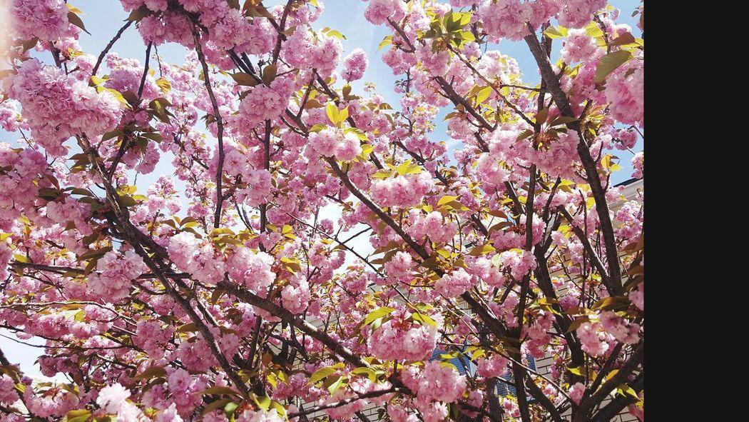 Flower Beauty In Nature Blossom Springtime Freshness