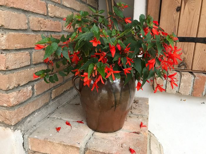 Growth Potted Plant Red Plant Flower Nature Architecture No People Day Leaf Outdoors Building Exterior Fragility Freshness