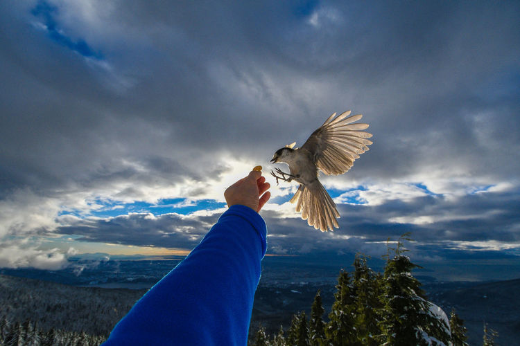 Man feeding bird against sky
