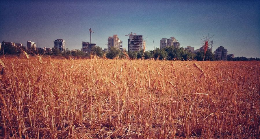 Field Sky Architecture Built Structure Day Agriculture Outdoors No People Building Exterior Skyscraper Clear Sky Nature Beutiful  Canonphotography Beauty In Nature Field Vintage Oldandnew City