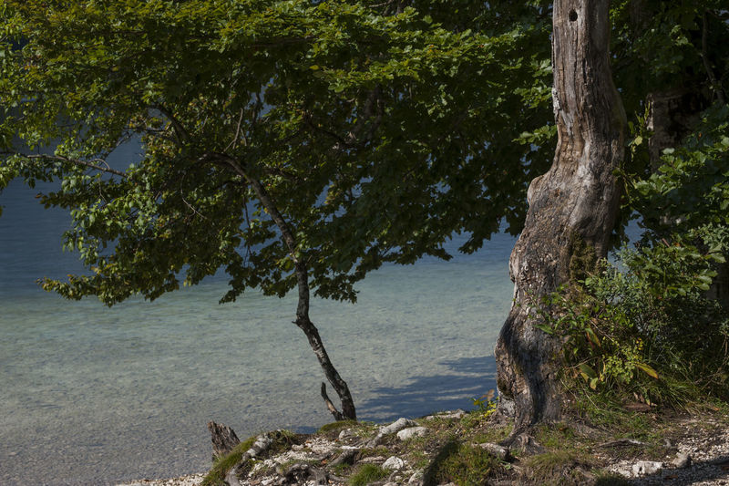 Trees growing on rock by sea