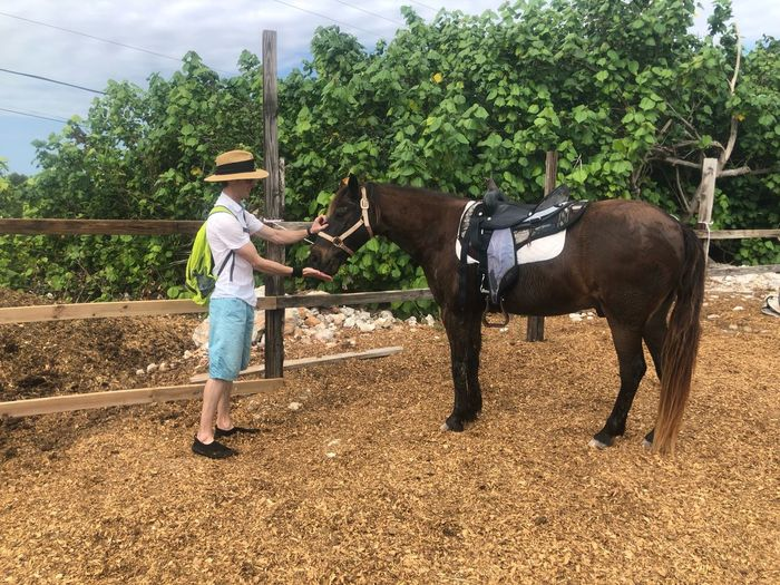 Spirit the horse Turks And Caicos Travel Destinations Providenciales Caribbean Farm Life Island Life Horse Real People Plant One Person Casual Clothing Mammal Nature Tree Animal Wildlife Leisure Activity Men Field Growth Full Length Vertebrate Lifestyles Agriculture Farm Outdoors Farmer