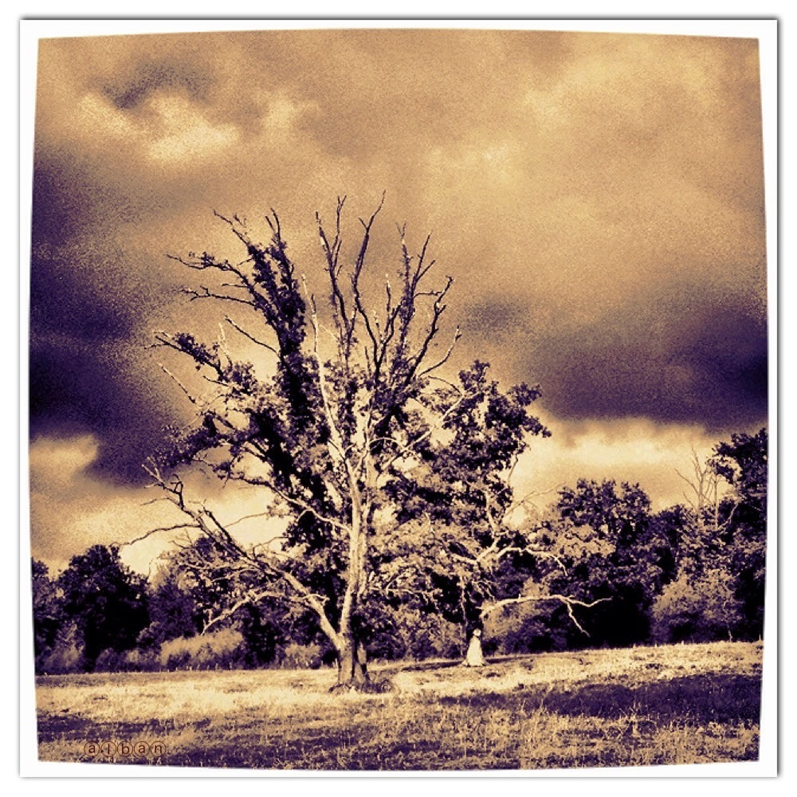 transfer print, sky, auto post production filter, cloud - sky, tree, bare tree, tranquil scene, tranquility, landscape, cloudy, field, scenics, beauty in nature, nature, cloud, sunset, branch, grass, overcast, non-urban scene
