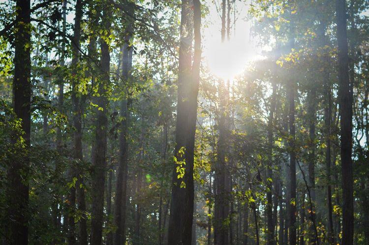 Sunlight Tree Nature Sun Outdoors Forest Sunbeam First Eyeem Photo