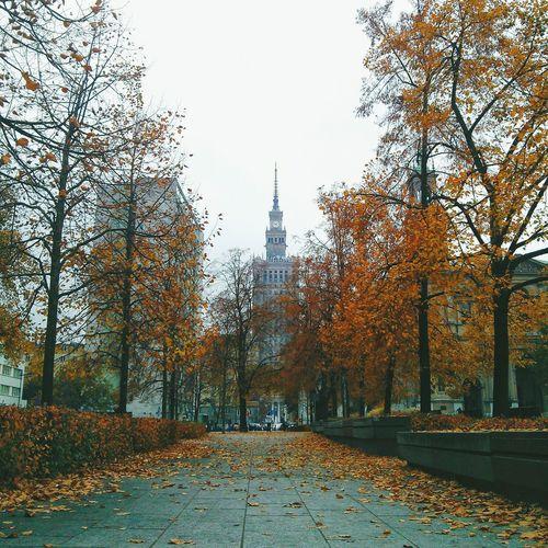 Autumn Colors Autumn Autumn Leaves Urban First Eyeem Photo