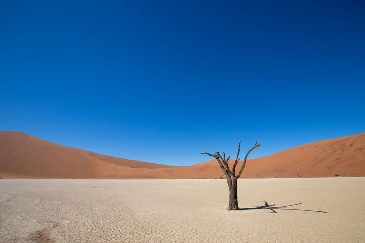 Arid Climate Beauty In Nature Blue Clear Sky Climate Copy Space Dead Plant Desert Environment Land Landscape Nature No People Non-urban Scene Outdoors Remote Sand Sand Dune Scenics - Nature Sky Tranquil Scene Tranquility