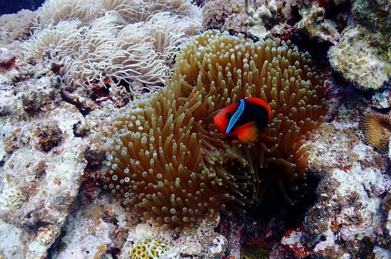 Anemone Sea Sea Life Coral Water Underwater UnderSea Animals In The Wild Fish Nature Beauty In Nature Animal Wildlife Marine Animal