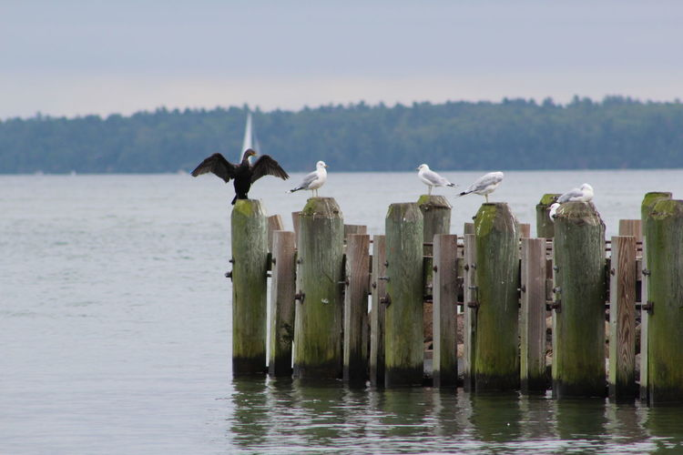 Birds Perching On Wooden Pier In A Lake