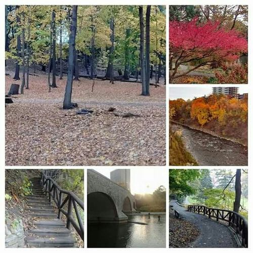 Fall in love in Toronto along the Humber River James Gardens Etienne Brule Park Humber River