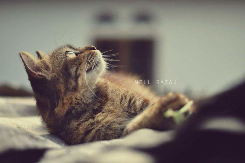 Cat. Vscocam VSCO Vscoperak Vscomalaysia Cats Cat Photography Cats 🐱 Cat Lovers Cat♡