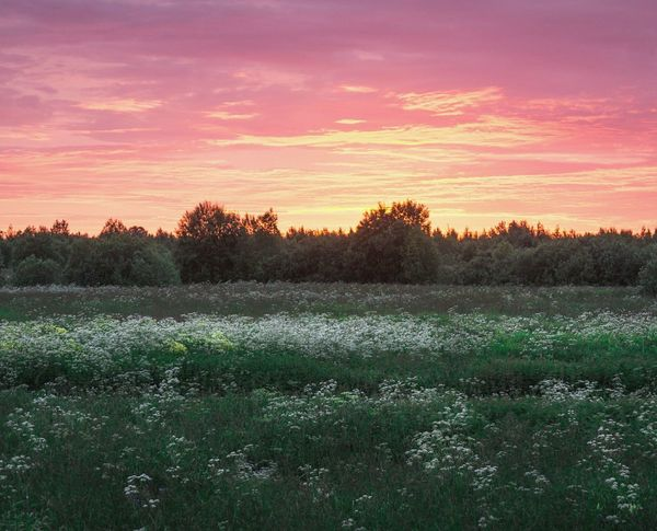 Sunset Field No People Landscape Outdoors Sun Nature Cloud - Sky Summer Nature Russia Sky Herb Summer Vibes Flowers,Plants & Garden Fields Photography Live For The Story Summertime Sunlight Travel Photography Nature_ Collection  Folklife
