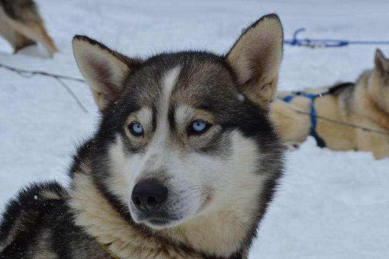 Close-up portrait of dog on snow