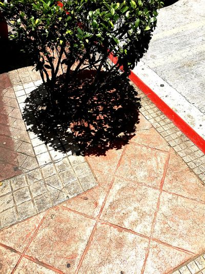 Pavement Bush | Shadow Sunlight Day Outdoors No People Growth Nature Plants Life Still Life Green Abstract Monserate Images
