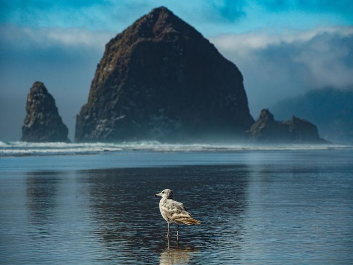 Seascape Coastline Haystack Rock Bird Mountain Water Sea Beauty Astrology Sign Rock - Object Sky Landscape Scenics Coast Ocean Coastal Feature Rocky Coastline