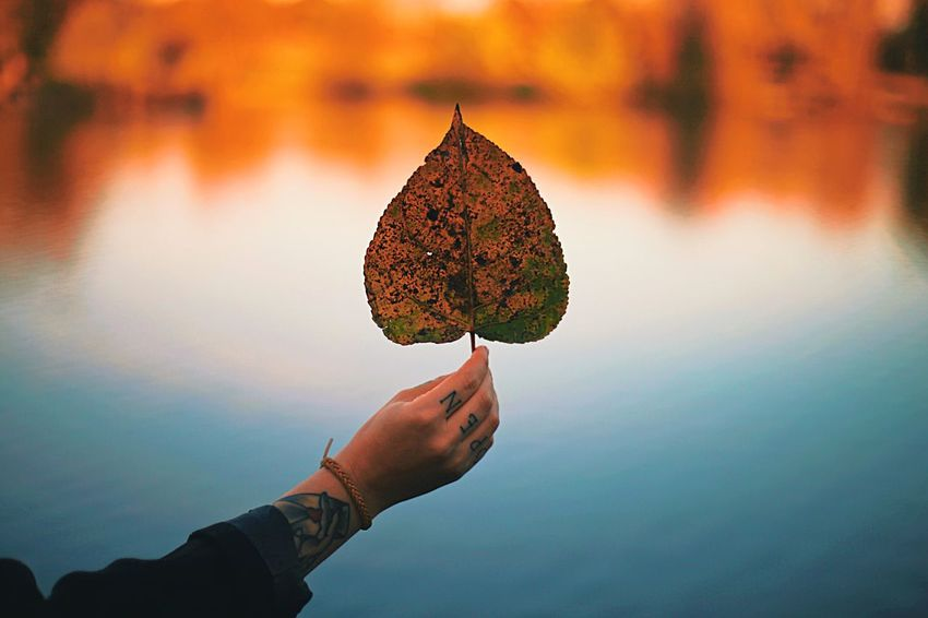 Autumn October Nature Warm Orange Autumnal Autumn Human Hand Autumn Leaf Human Body Part Real People Holding Outdoors Nature Close-up Focus On Foreground Water Beauty In Nature People An Eye For Travel