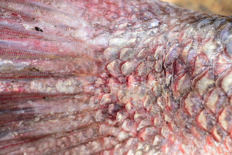 Fish scales Textured  Close-up Full Frame No People Fish Fish Scales Fish Scales Patterns Pink Color