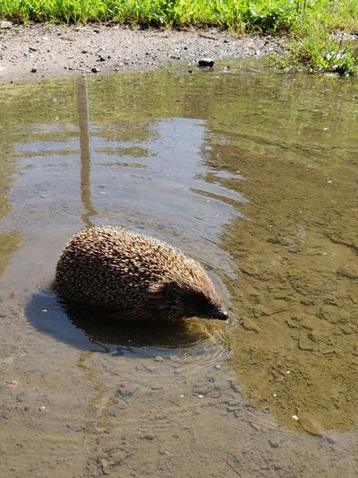 Reptile Water Beach Animal Themes Swamp Sand