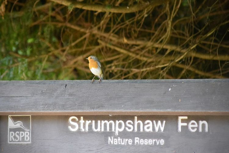 Nature Nikon D3300 Amateurphotography Animal Animal Themes Animal Wildlife Animals In The Wild Bird Close-up Communication Day Focus On Foreground Information Nature No People One Animal Outdoors Perching Robin Robin Redbreast Text Vertebrate Western Script Wood - Material Zoology