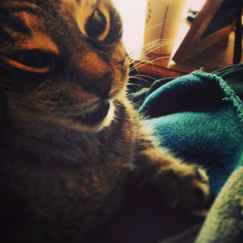 Rascalthecat