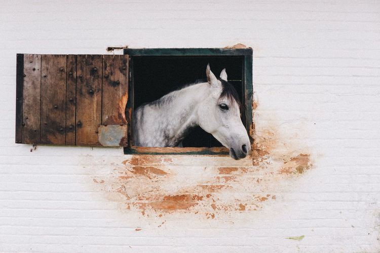 Animal Bricks Horse Horses Nature VSCO Wild Window Market Reviewers' Top Picks