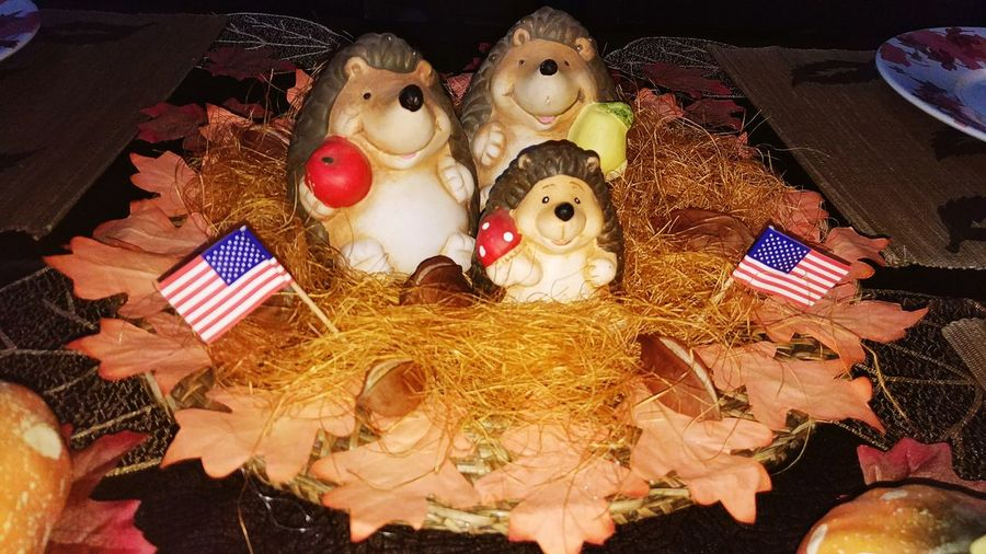 American Hedgehog Family Thanks Giving  Hedgehog Family EyeEm Selects Indoors