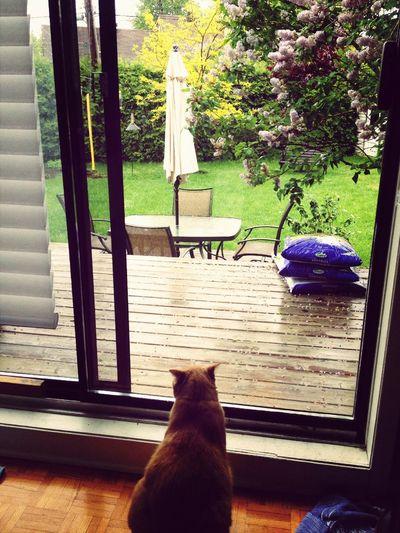 Rain Drops Window Lonely Cat Flowers First Eyeem Photo