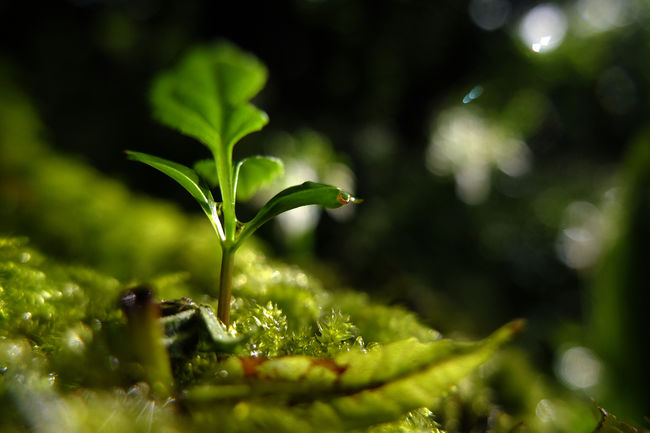 Beauty In Nature Close-up English Countryside Green Growth Macro Moss Nature New Plant Seedling Shallow Depth Of Field Tree Water Drops WoodLand Woodlands