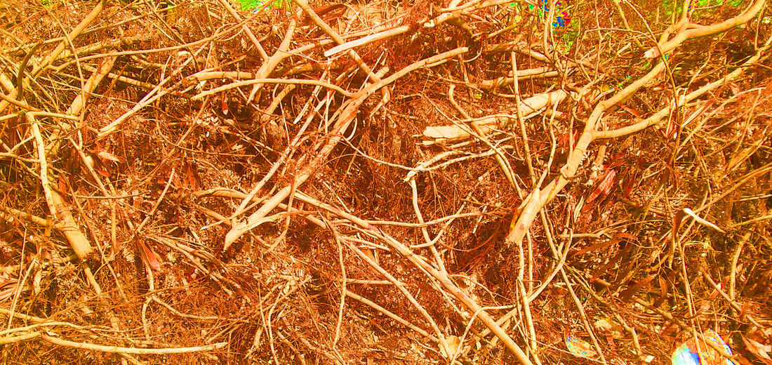 Make The Best Out Of Waste. Backgrounds Close-up Full Frame Growth Make The Best Out Of Waste Nature Night No People Outdoors Scrap Metal Scrapyard Waste Management