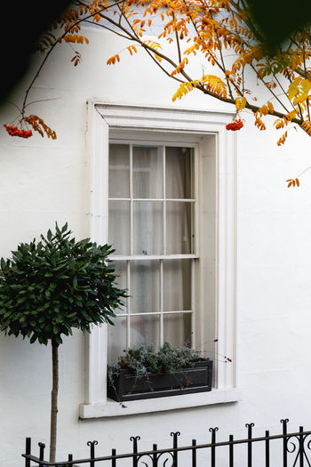 Autumn in London Architecture Built Structure Building Exterior Building Window Plant Day Tree No People House Outdoors Nature Animal White Color Animal Themes Growth Residential District Animals In The Wild Animal Wildlife One Animal Travel Destinations London Autumn Spring