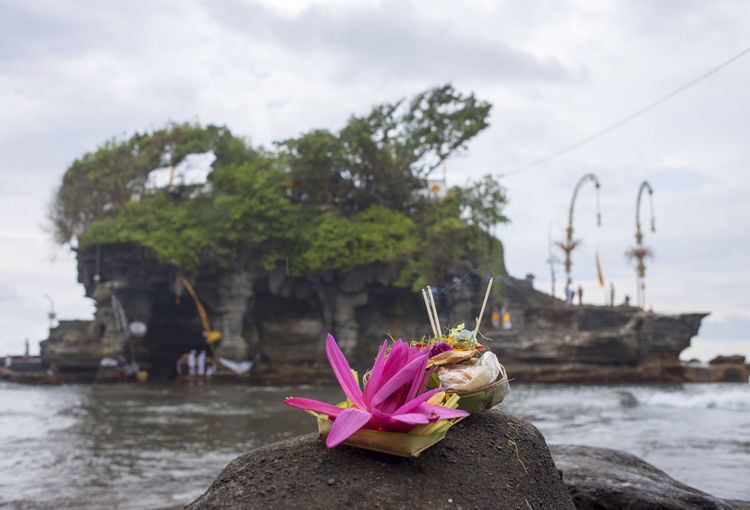 Bali, Indonesia Culture Flower Horizontal Nature No People Outdoors Temple Water