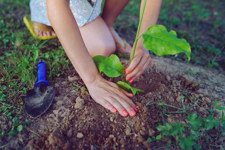 Low section of woman planting sapling in dirt