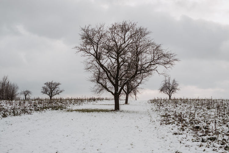 Bare tree on field against sky during winter