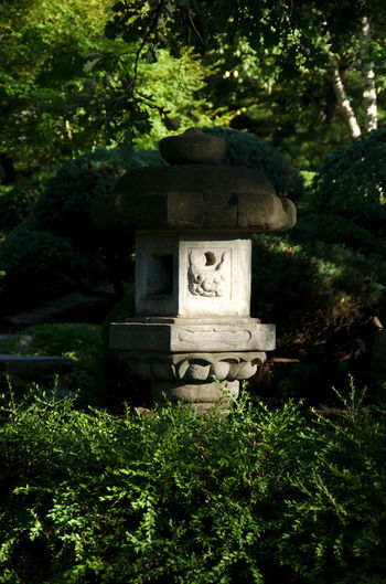 Lantern lit by the setting sun Japanese  Cemetery Close-up Day Evening Growth Nature No People Outdoors Plant Religion Sculpture Sidelight Spirituality Tree