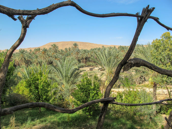 Tunisia travel holidays Plant Tree Scenics - Nature Tranquility No People Land Day Tranquil Scene Nature Sky Environment Beauty In Nature Growth Landscape Branch Non-urban Scene Outdoors Green Color Clear Sky Tree Trunk Climate Arid Climate