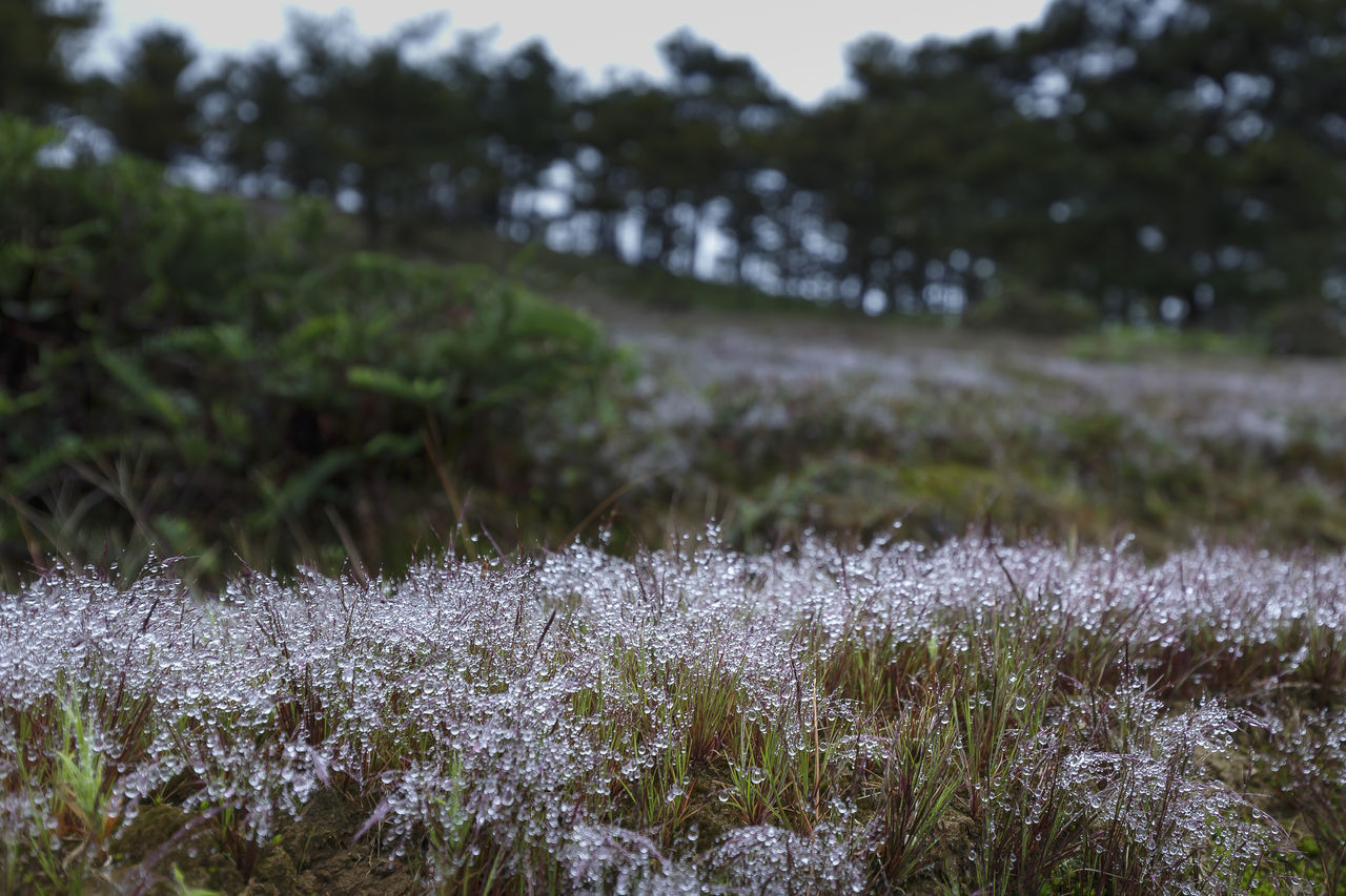 nature, growth, beauty in nature, field, tranquility, outdoors, day, grass, cold temperature, no people, tranquil scene, plant, winter, focus on foreground, snow, landscape, scenics, fragility, tree, freshness, flower, close-up